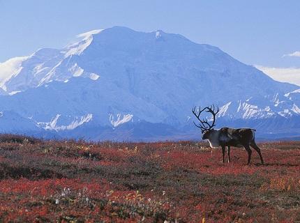 Mount McKinley — the highest peak in Alaska