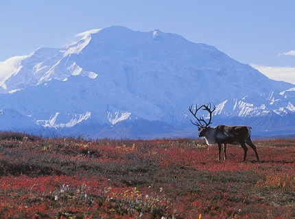 Mount McKinley — the highest peak in Alaska